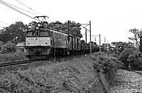 19810620216